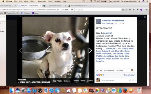 RAY A502146 was CHIPPER RESCUED Screen Shot 2017-04-09 at 10.31.30 AM