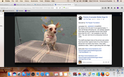 CHI CHI RESCUED Screen Shot 2017-05-10 at 11.33.23 AM