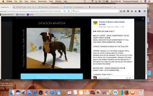 DAWSON RESCUED Screen Shot 2017-06-11 at 5.55.22 AM