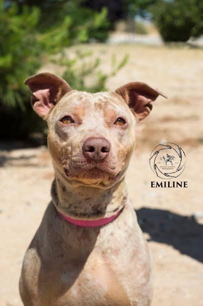 EMILINE FREEDOM PHOTO
