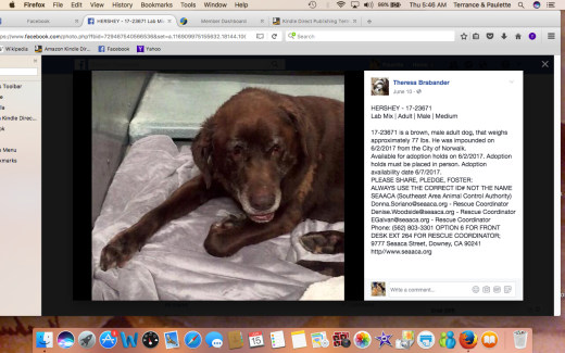 HERSHEY RESCUED Screen Shot 2017-06-15 at 5.46.30 AM