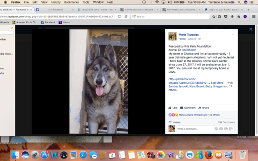 CHANCE 3 RESCUED Screen Shot 2017-07-04 at 10.09.42 AM