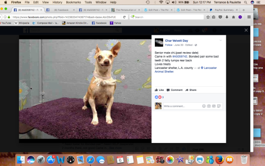 TANNER 2 RESCUED named by rescue came in with A505974 TASHA 2Screen Shot 2017-08-06 at 12.17.37 PM