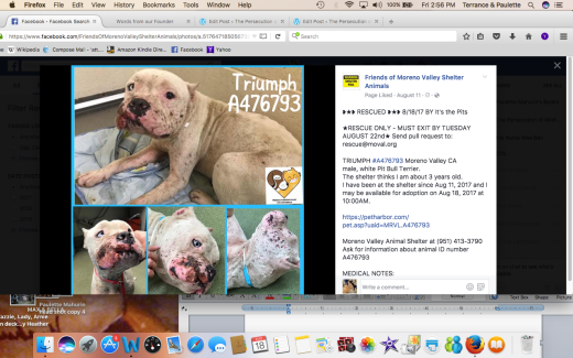 TRIUMPH RESCUED HE WAS USED AS BAIT STATED ON SHELTER SITE -NO OTHER INFO Screen Shot 2017-08-18 at 2.56.13 PM