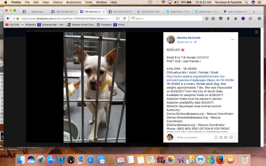 AVALONA RESCUED Screen Shot 2017-09-29 at 6.22.23 AM