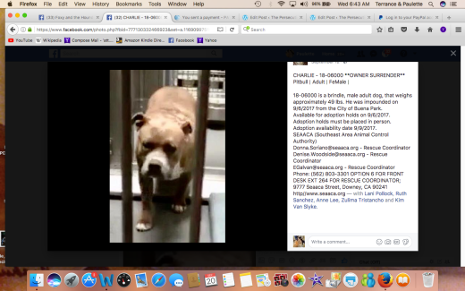 CHARLIE 5 RESCUED Screen Shot 2017-09-20 at 6.43.23 AM