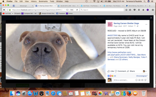CHICO 2 RESCUED Screen Shot 2017-09-20 at 10.31.03 AM