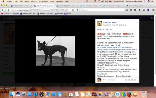 DUGGAN RESCUED Screen Shot 2017-09-05 at 6.10.35 AM