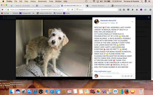 ETHEL RESCUED Screen Shot 2017-09-29 at 6.06.58 AM
