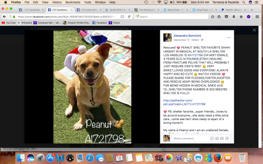 PEANUT RESCUED Screen Shot 2017-09-18 at 6.04.51 AM