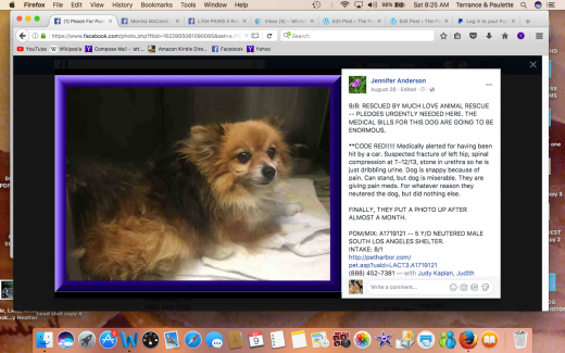 POM #2 aka Peter rescued by Much Love Animal Rescue RESCUED Screen Shot 2017-09-09 at 8.25.20 AM