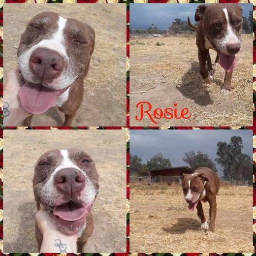 ROSIE 3 FREEDOM PHOTOS