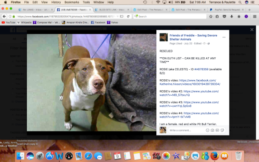 ROSIE 3 RESCUED Screen Shot 2017-09-09 at 7.06.07 AM