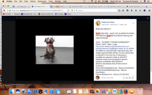 JO JO REWSCUED Screen Shot 2017-10-04 at 5.58.44 AM