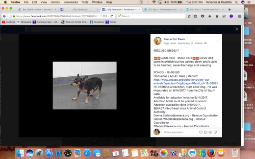 PONGO RESCUED Screen Shot 2017-10-03 at 6.07.34 AM