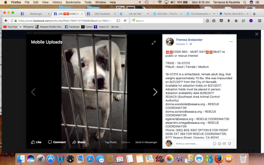 TRIXIE RESCUED Screen Shot 2017-10-23 at 6.18.31 AM