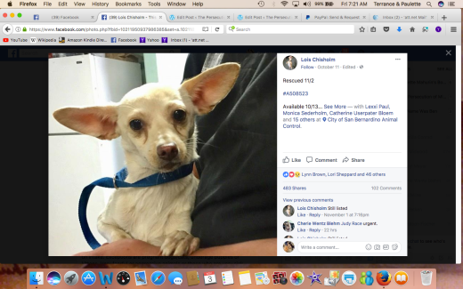 BUTTERCUP RESCUED Screen Shot 2017-11-03 at 7.21.20 AM