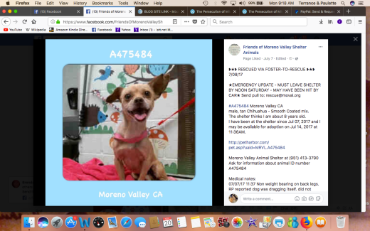 CHESTER RESCUED Screen Shot 2017-11-20 at 9.18.38 AM