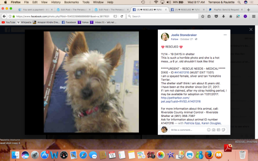 DIXIE RESCUED aka MELISSA #Screen Shot 2017-11-15 at 8.17.22 AM