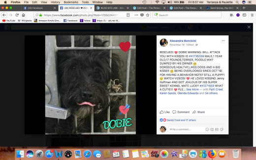 DOBIE RESCUED Screen Shot 2017-11-24 at 6.07.38 AM