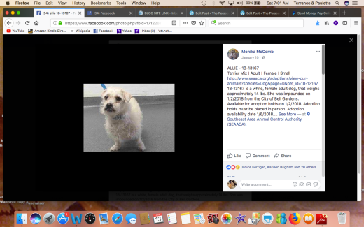 ALLIE RESCUED Screen Shot 2018-01-13 at 7.01.55 AM