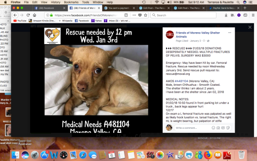 AMOS RESCUED Screen Shot 2018-01-06 at 9.12.20 AM