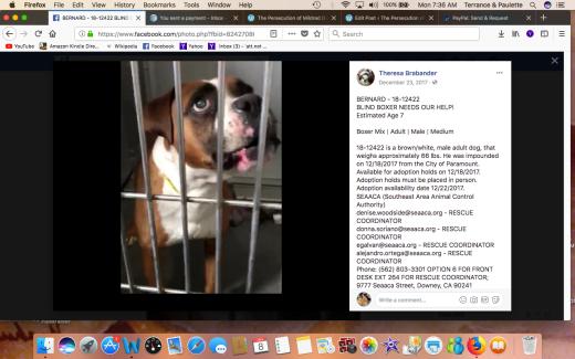BERNARD RESCUED Screen Shot 2018-01-08 at 7.36.01 AM
