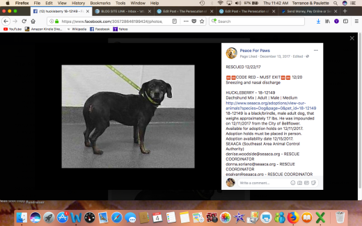 HUCKLEBERRY RESCUED Screen Shot 2018-01-04 at 11.42.09 AM