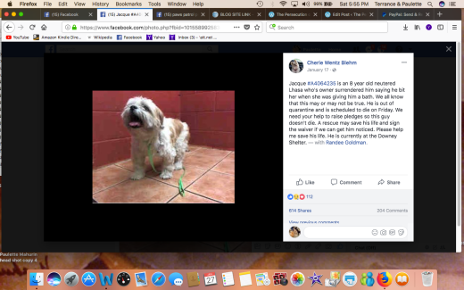 JACQUE RESCUED Screen Shot 2018-01-27 at 5.55.23 PM