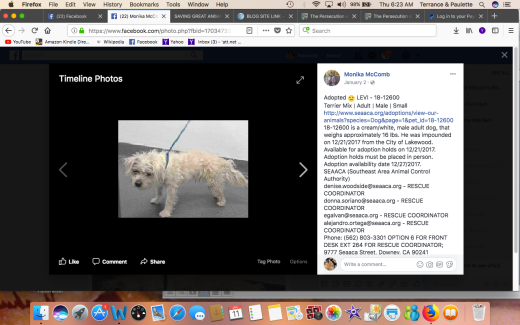 LEVI RESCUED Screen Shot 2018-01-11 at 6.23.18 AM