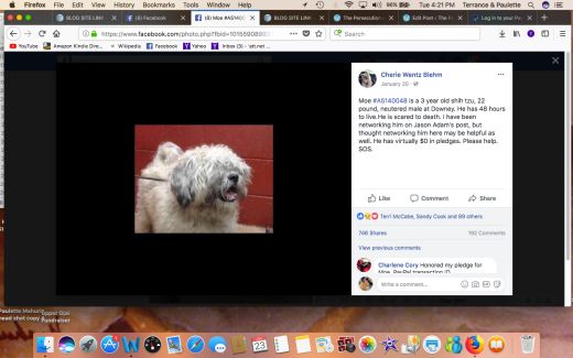 MOE RESCUED Screen Shot 2018-01-23 at 4.21.37 PM
