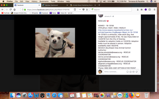 ROMEO RESCUED Screen Shot 2018-01-12 at 2.39.08 PM