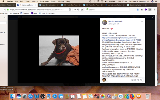 ANNIE 2 RESCUED Screen Shot 2018-02-02 at 9.00.22 AM