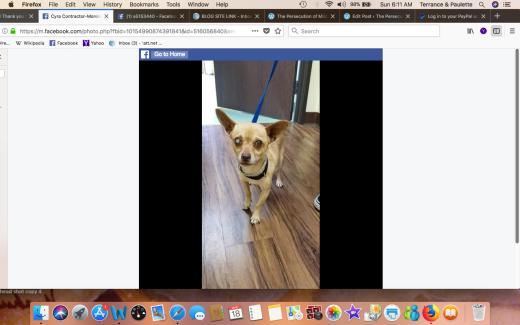 ANGEL 2 AKA GINO FREEDOM BLIND DOG Screen Shot 2018-03-18 at 6.11.08 AM