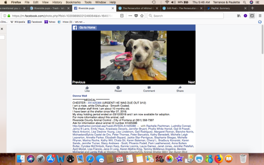 CHESTER 2 aka SAILOR RESCUED Screen Shot 2018-03-29 at 5.46.37 AM