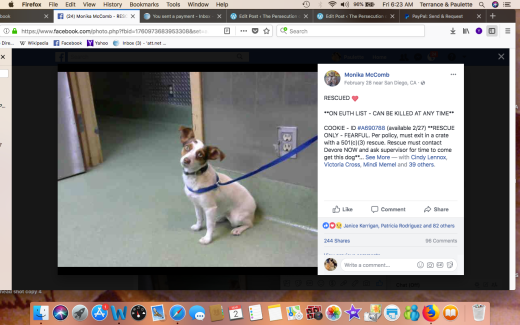 COOKIE 7 RESCUED Screen Shot 2018-03-02 at 6.23.34 AM