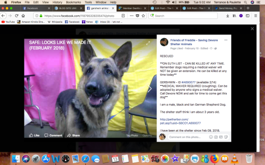 GERSHWIN RESCUED Screen Shot 2018-03-13 at 5.32.31 AM