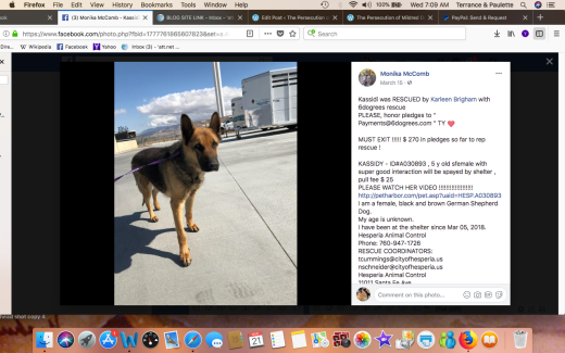 KASSIDY RESCUED creen Shot 2018-03-21 at 7.09.33 AM
