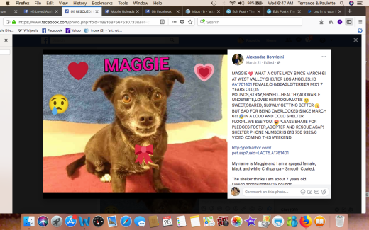 MAGGIE 3 RESCUED