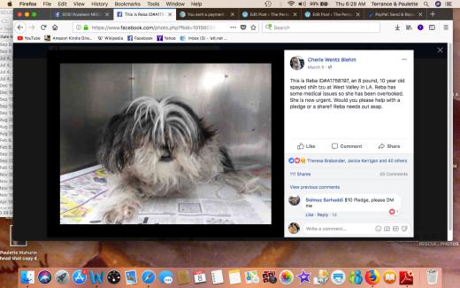 REBA RESCUED Screen Shot 2018-03-08 at 6.28.55 AM.png