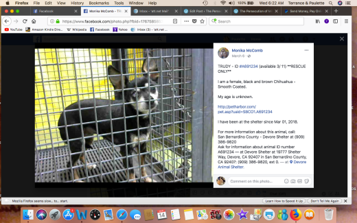 TRUDY 2 RESCUED Screen Shot 2018-03-14 at 6.22.43 AM