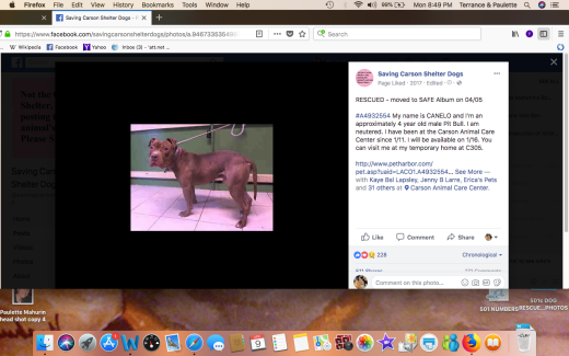 CANELO 2 RESCUED Screen Shot 2018-04-09 at 8.49.12 PM