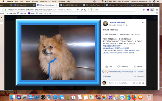 FRANKIE 2 RESCUED POM A1428448Screen Shot 2018-04-08 at 6.30.28 AM
