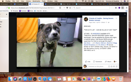 JETHRO RESCUED Screen Shot 2018-04-15 at 6.31.46 AM