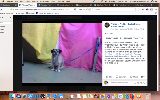 RASCAL 2 RESCUED Screen Shot 2018-04-13 at 9.20.57 AM