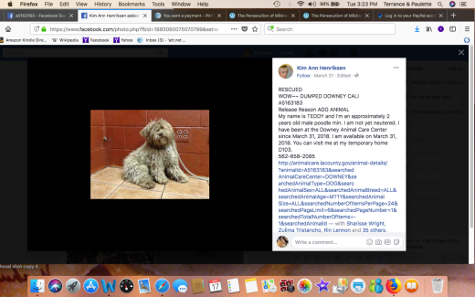 TEDDY 4 RESCUED Screen Shot 2018-04-17 at 3.23.22 PM