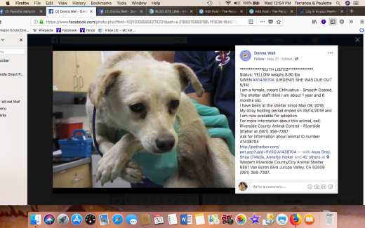 GWEN RESCUED Screen Shot 2018-05-30 at 12.54.37 PM
