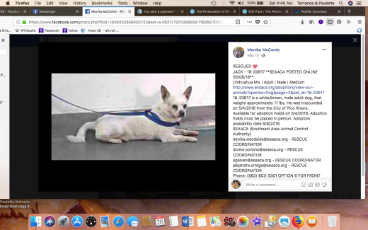 JACK 4 RESCUED Screen Shot 2018-05-26 at 4.46.24 AM