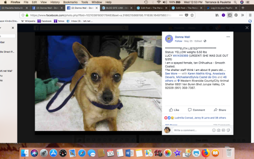 LUCY 5 RESCUED Screen Shot 2018-05-30 at 12.53.58 PM