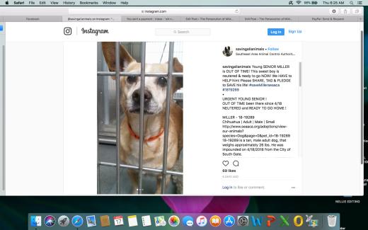 MILLER SENIOR DOG RESCUED